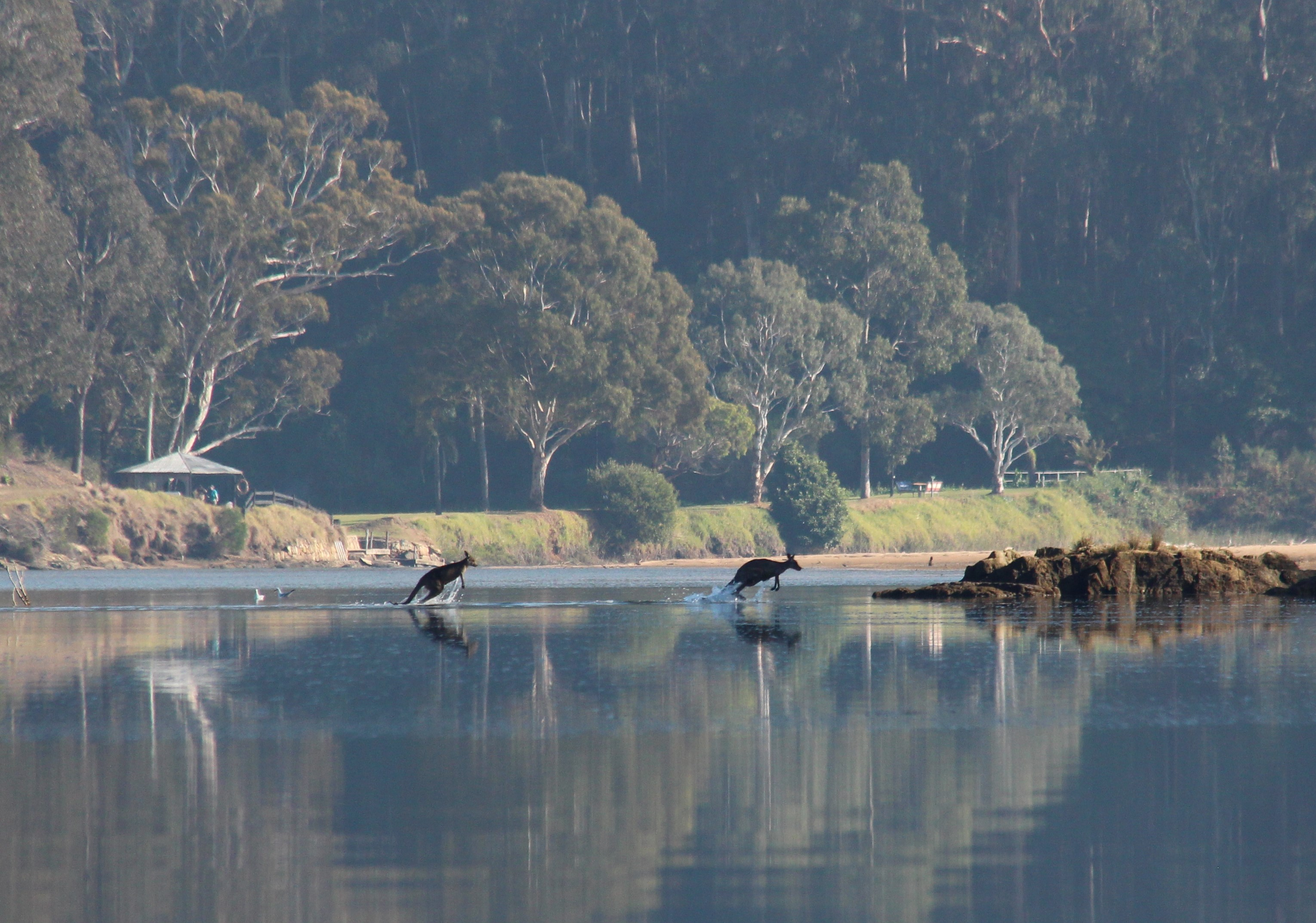 Roos on the river